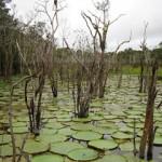 Ecoturismo en Amazonas