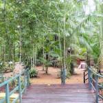 El Bosque de la Ciencia en Manaos.