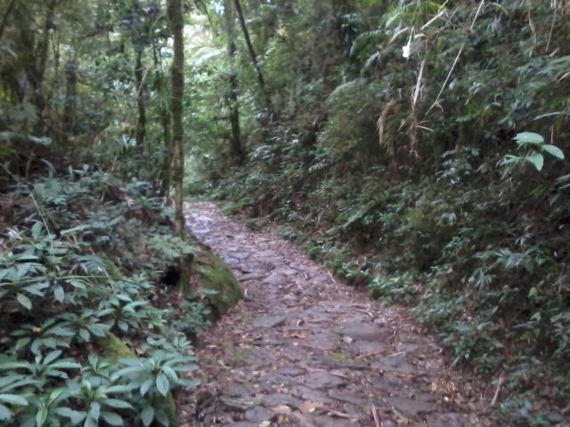 Caminho-do-Itupava-Tilha-de-Pedras